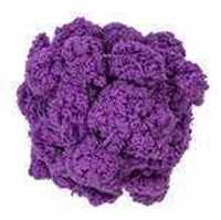 Picture of Pomp-a-Doodle - Grape - NIL STOCK