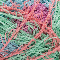 Picture of Scrubby / Stripes - Calypso - IN STOCK